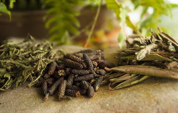 Gaspé Spices – Pourquoi pas?