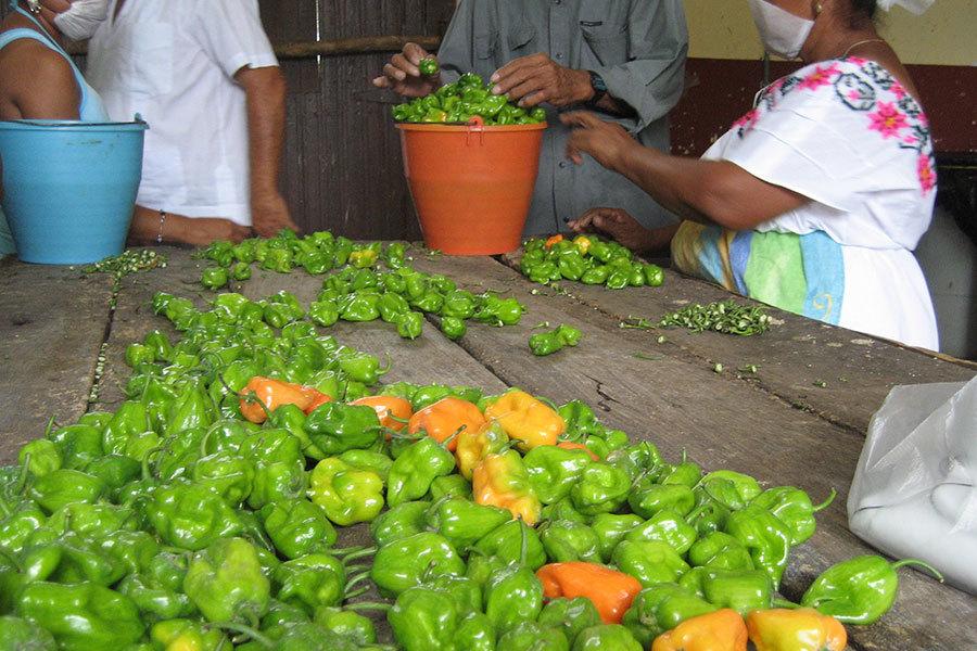 Chile Habanero - Tastes and Flavours : Yucatan