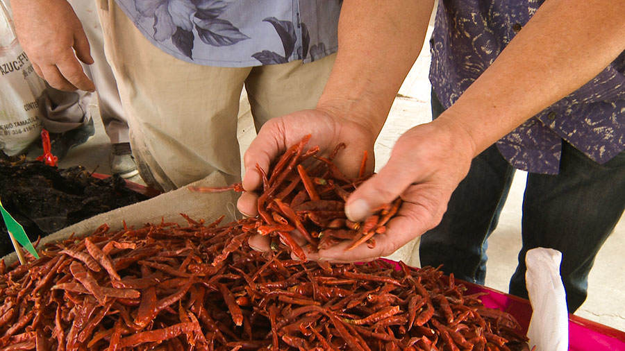 Chiles - Tastes and Flavours: Oaxaca