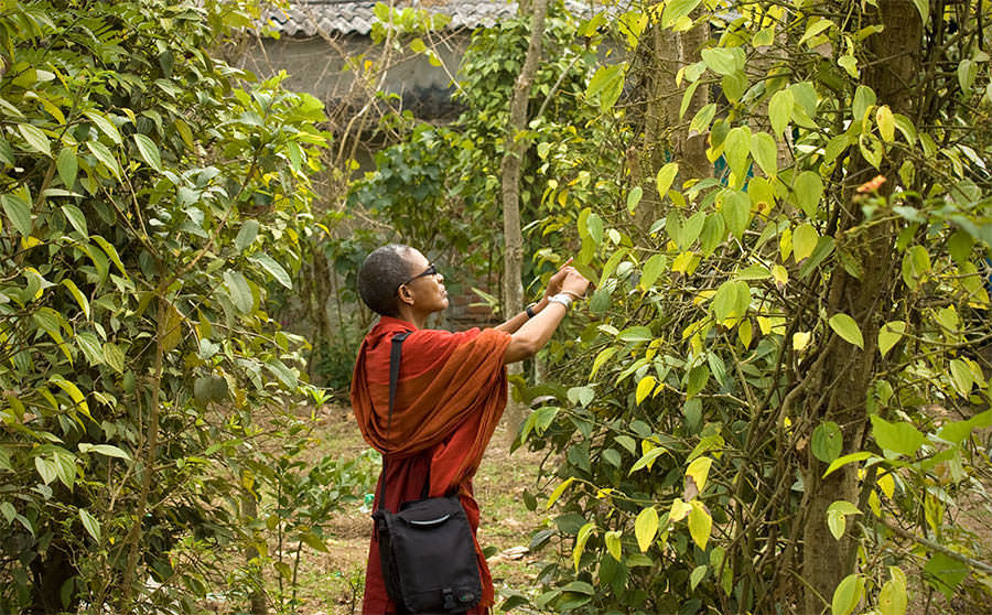Ethne with Pepper vines - Tastes and Flavours: Southern India