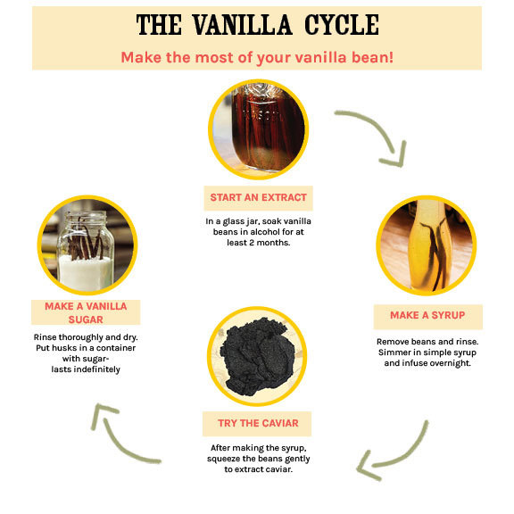 Vanilla Cycle