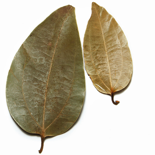 cinnamon-leaves