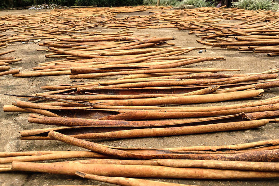ceylon vs cassia not all cinnamon is created equal - 900×600